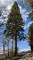 Buchenbach Baum 20190418 174345.jpg