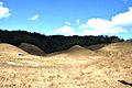 Buning Meadow.jpg