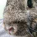 Bunny up and close and personal.jpg