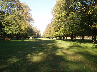 Bushy Park - Chestnut trees in early autumn