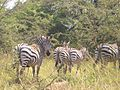Bwindi Impenetrable National Park-112412.jpg