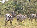 Bwindi Impenetrable National Park-112412.jpg