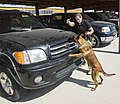 CBP Canine Training Facility El Paso Texas (28127490340).jpg