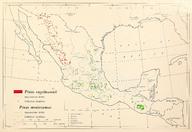 CL-49 Pinus engelmannii & Pinus montezumae range map.png
