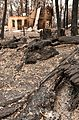CSIRO ScienceImage 10528 Property destroyed by fire at Kinglake after the Black Saturday bushfires.jpg