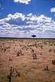 CSIRO ScienceImage 1279 Desert Plain.jpg