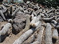 Cactus & Succulents (183446535).jpg