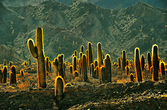 Suchomilné rastliny - kaktusy