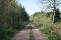 Callan's Lane Wood - geograph.org.uk - 412357.jpg