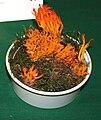 Calocera viscosa 2prg.jpg