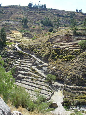 Tacna Region - Inca Trail (Qhapaq Ñan) and terraces in Tarata (Pacific Rim).