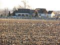 Can you pick out the geese in this field (11655364153).jpg