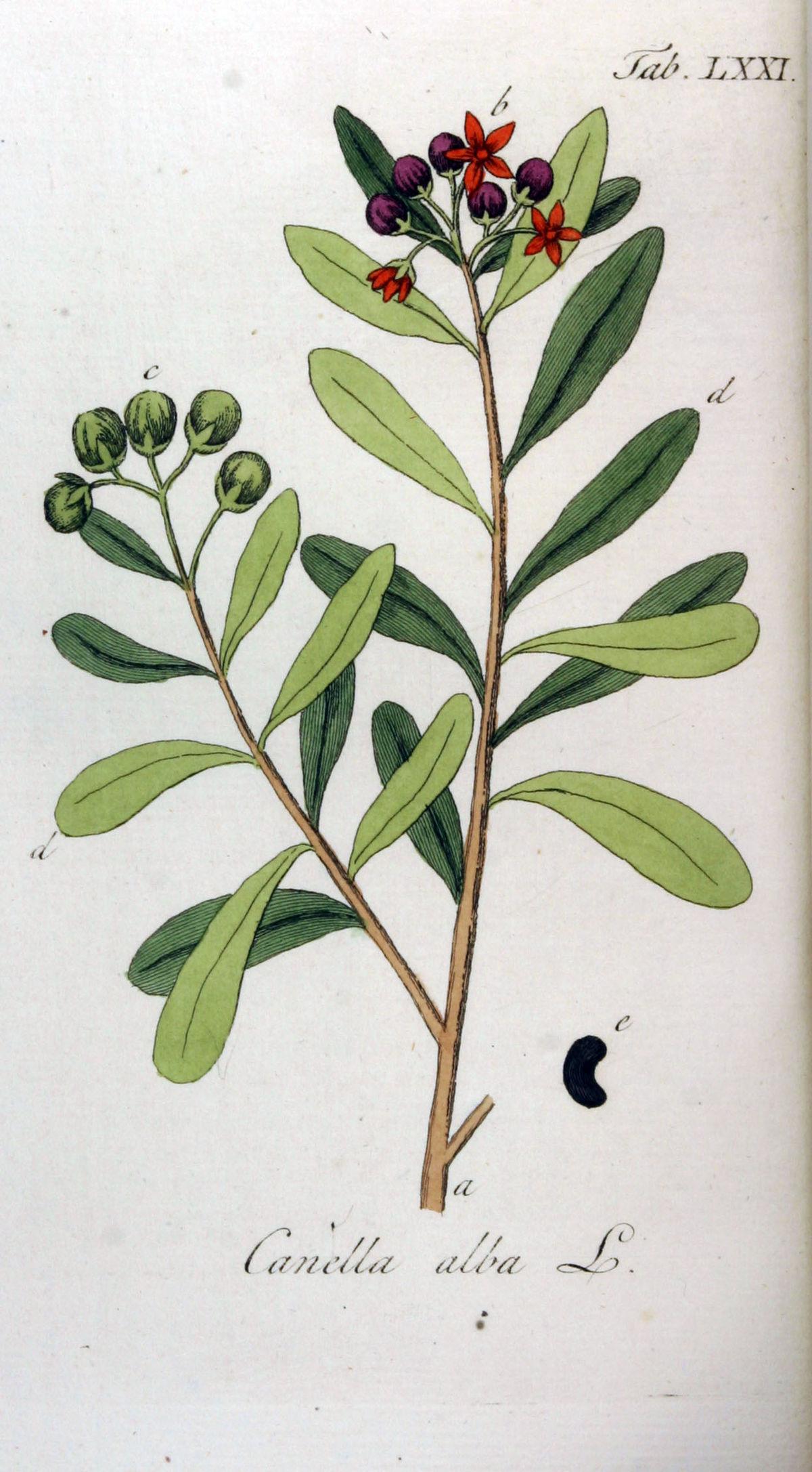 canellaceae