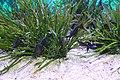 Capetown - Two Oceans Aquarium IMG 9452.JPG