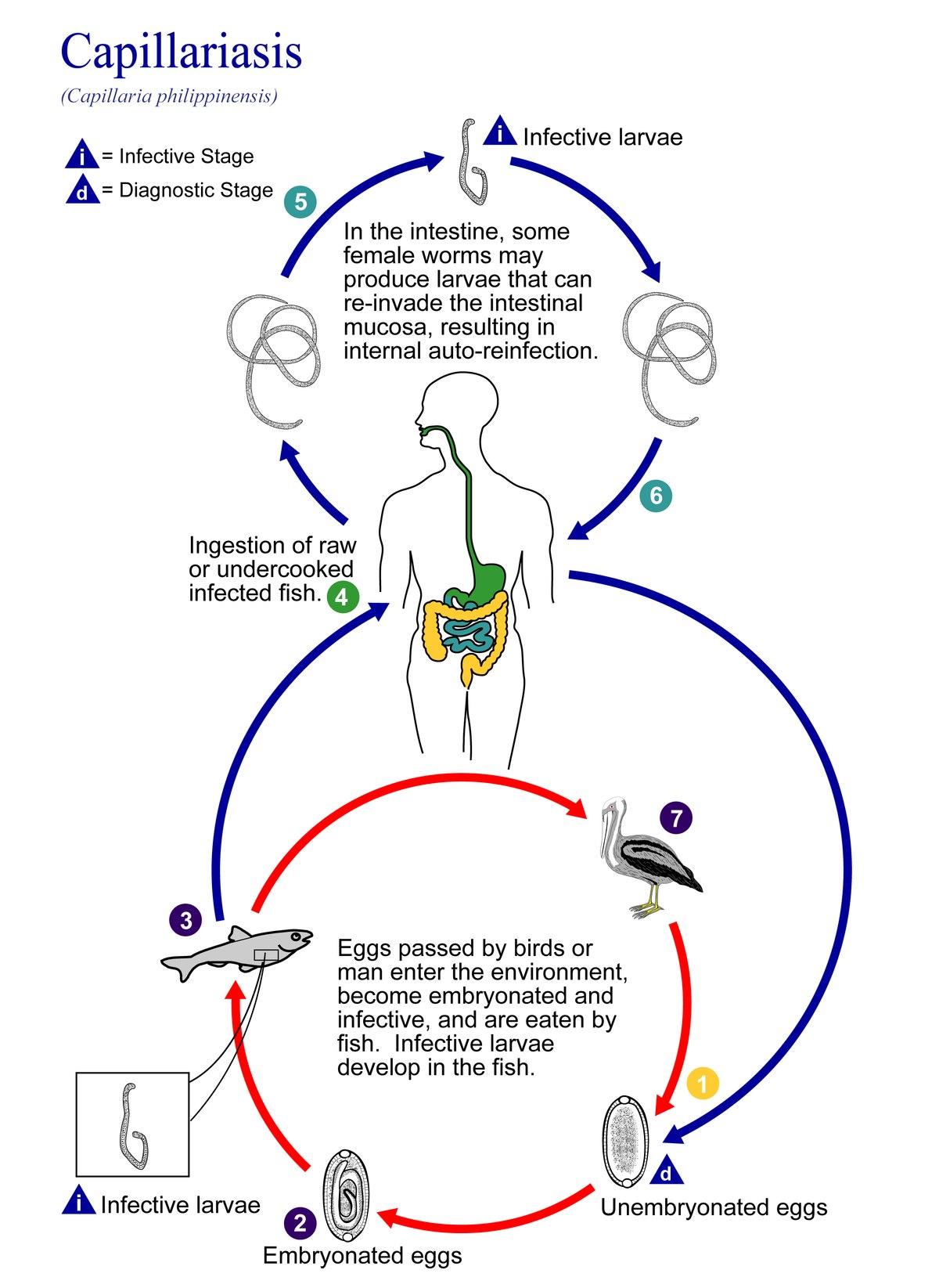 parasitismo intestinal en filipinas