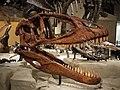 Carcharodontosaurus Japan.jpg