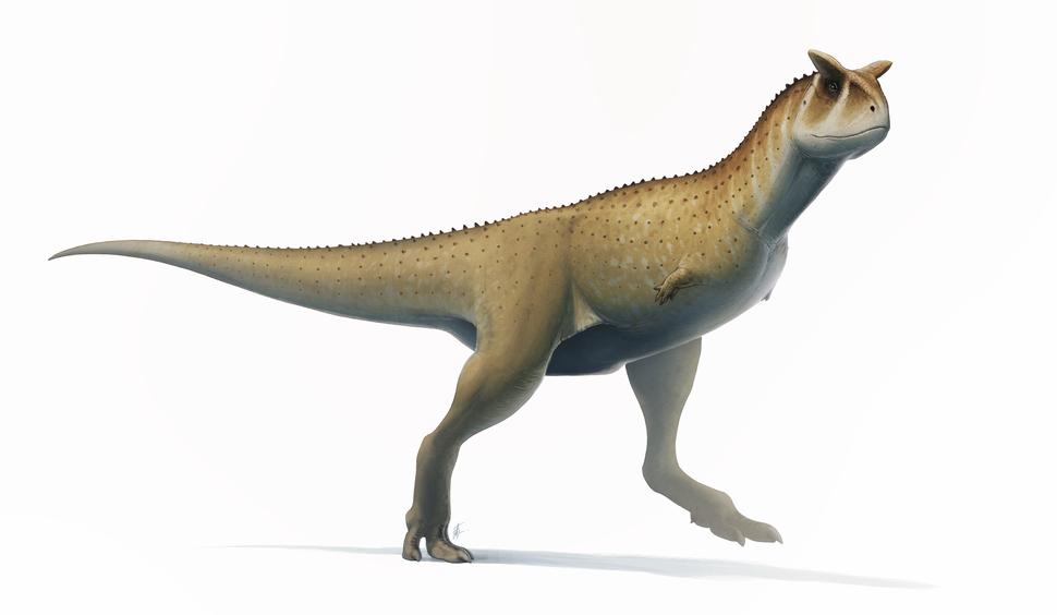 Carnotaurus 2017