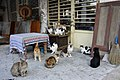 Cats In Turkey (59048546).jpeg