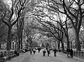 Central Park (38091362).jpeg