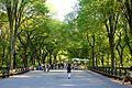 Central Park in June.jpg