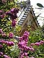 Cercis chinensis in Tenryuji Garden.jpg