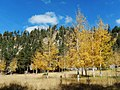 Changing Fall Colors on Santa Fe NF (22331480390).jpg