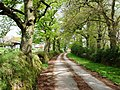 Chawleigh - Lane by The Barton - geograph.org.uk - 1278176.jpg