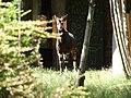 Chester Zoo (21900929258).jpg