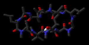 Modell von Ciclosporin