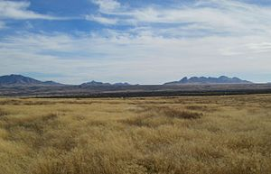 Cienega Valley (Arizona) - Image: Cienega Valley Las Cienegas National Conservation Area Arizona 2014
