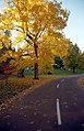 "Cincinnati - Spring Grove Cemetery & Arboretum ""The Road To Autumn Yellow"" (8174501396).jpg"