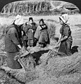 Circa 1906 Detail, Peasant women heading rice with steel combs in the fields on Suruga Bay Japan 3c03629v (cropped).jpg