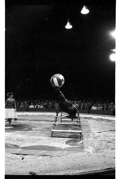File:Circus Krone auf dem Wilhelmplatz (Kiel 35.991).jpg
