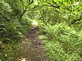 Coast path in Sloo Wood - geograph.org.uk - 1430969.jpg