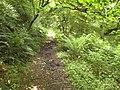 Coast path in Sloo Wood - geograph.org.uk - 1430969.jpg