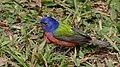 Colorín sietecolores - panoramio (1).jpg