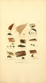 Coloured Figures of English Fungi or Mushrooms - t. 374.png