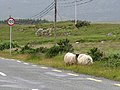 Connemara - Inagh Valley - Killersheep - panoramio.jpg