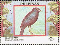 Copsychus cebuensis 1992 stamp of the Philippines.jpg