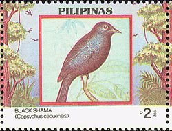 Copsychus cebuensis 1992 stamp of the Philippines.jpg