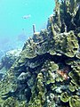 Coral Scene 2 (7157495209).jpg