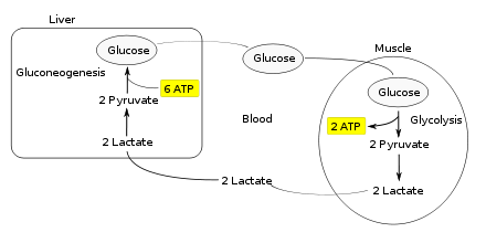 anabolic processes and catabolic processes