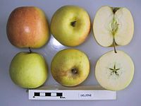 Cross section of Deljeni, National Fruit Collection (acc. 1999-010).jpg