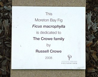 Russell Crowe - Moreton Bay Fig donated by The Crowe Family in Centennial Park, New South Wales