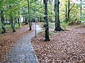 Culduthel Woods in autumn - geograph.org.uk - 354789.jpg