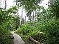 Dalby Söderskog nationalpark1.jpg
