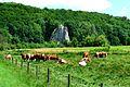 Das Eselsburger Tal bei Herbrechtingen im Kreis Heidenheim. 06.jpg