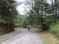 Daxueshan Forest Road 大雪山林道 - panoramio.jpg