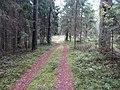Degučių sen., Lithuania - panoramio (224).jpg