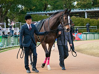 Deirdre (horse) Japanese Thoroughbred racehorse
